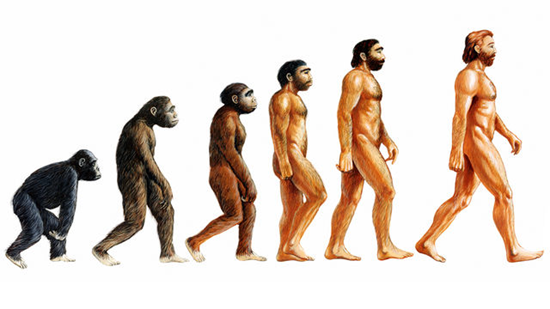 Darwin's Theory of Evolution book cover showing the progression of man evovled from an ape