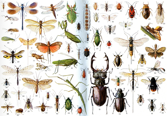 """Enough insects in a single picture to give you the """"willies"""" for a month"""