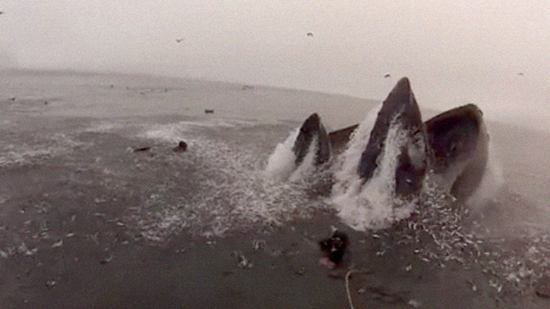 Whale nearly swallows photographer off the coast of South Africa