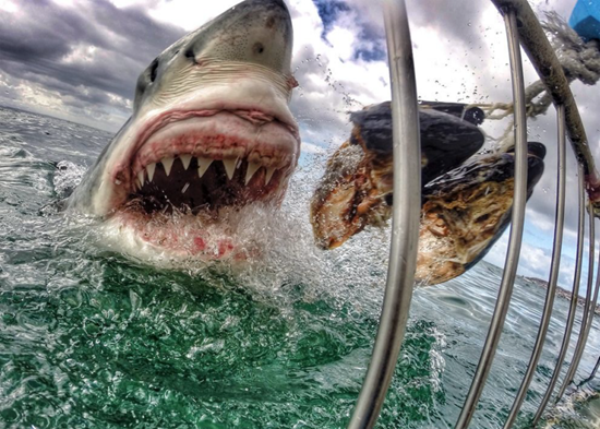 Terrifying photo of a great white shark